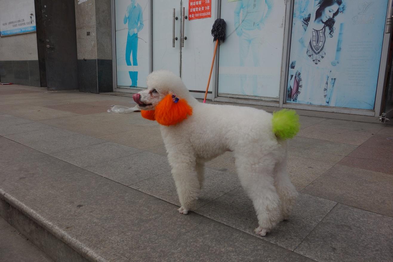 Besonderheiten in China Hunde